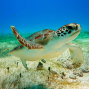 Private Marine Turtles Tour