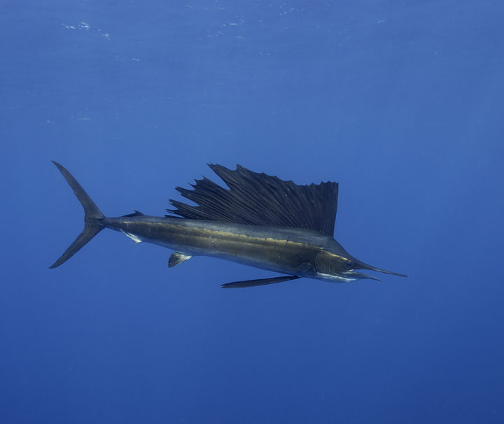 sailfish private tour cancun